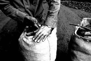 Il lavoro del carbonaio